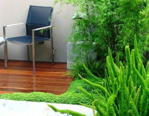 Die zimmerpflanze bubikopf schafft gr ne akzente zu hause - Grune bodenfliesen ...