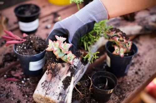 Schöne Dekoration aus Treibholz selber machen blumentopf sukkulenten