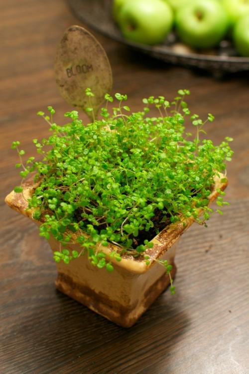 babykopf dekorativ zimmerpflanze grüne akzente schale voller äpfel
