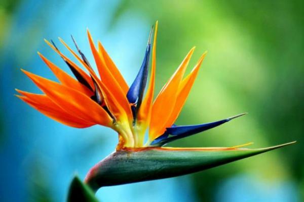Haben Sie Exotische Pflanzen Zu Hause Eine Aussergewohnliche Deko