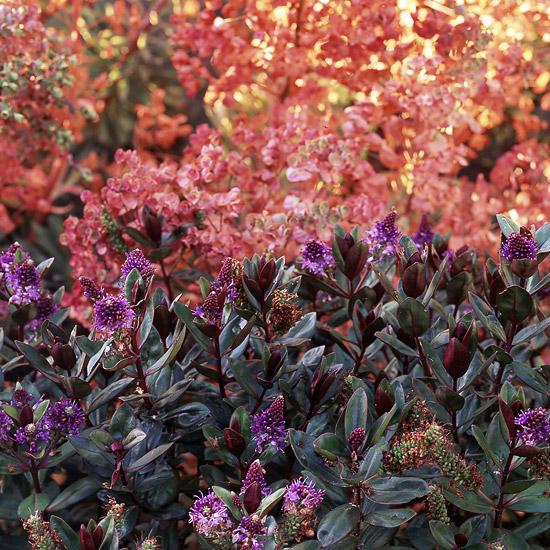 farbenfrohe b sche f r ihren garten 27 charmante pflanzen f r sie. Black Bedroom Furniture Sets. Home Design Ideas