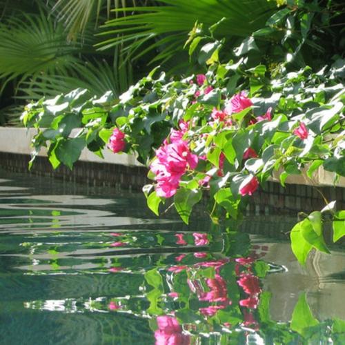 garten und landschaftsbau ideen lila grüne bougainvillea
