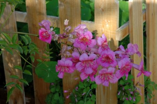 garten und landschaftsbau ideen zaun verzieren weg