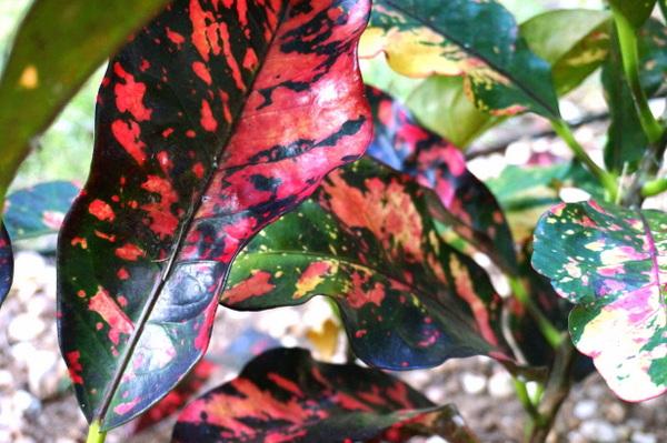gartenarbeit im herbst blumentopf blumen zimmer farbig