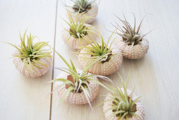 hängende blumentöpfe zimmerpflanzen blumenbehälter sukkulenten