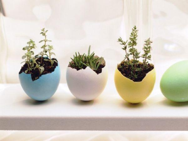 hängende blumentöpfe zimmerpflanzen eierschale farbig