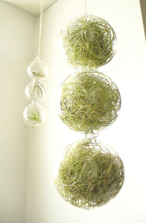 hängende blumentöpfe zimmerpflanzen luftige glas sphäre