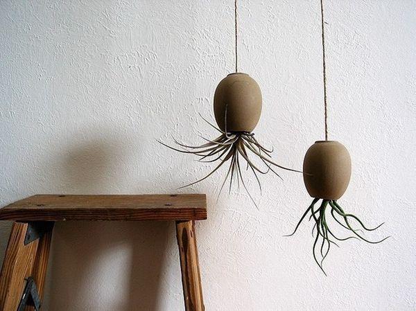 hängende blumentöpfe zimmerpflanzen luftige michael mcdowells