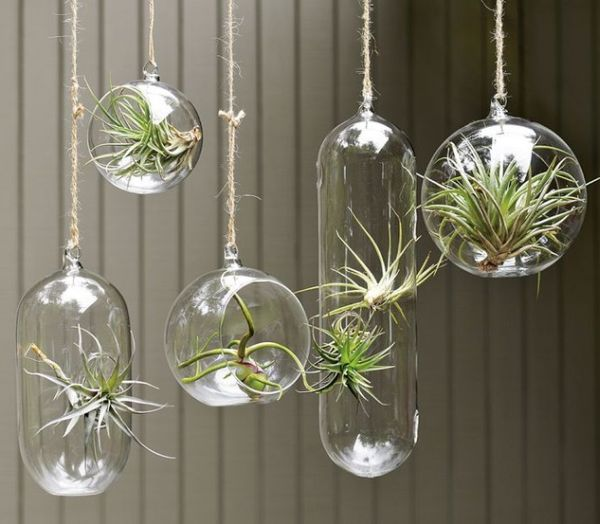 hängende blumentöpfe zimmerpflanzen luftige terrarium glas sukkulenten