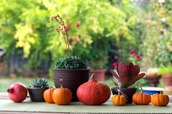 kürbis dekoideen mini in orange und granatapfel
