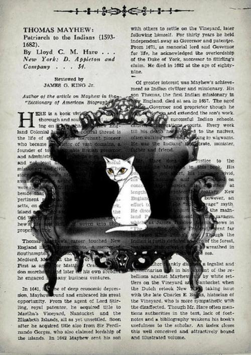 katzen deko originelle poster