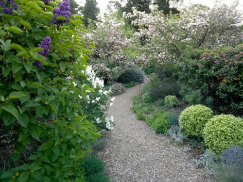 nachhaltiger garten fliederbüsche in lila und weiß