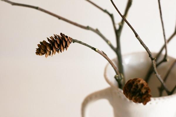 tannenzapfen und herbstblätter dekoideen natur pur
