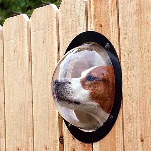 Modernes Zubehör für Ihre Haustiere glas fenster gartenzaun