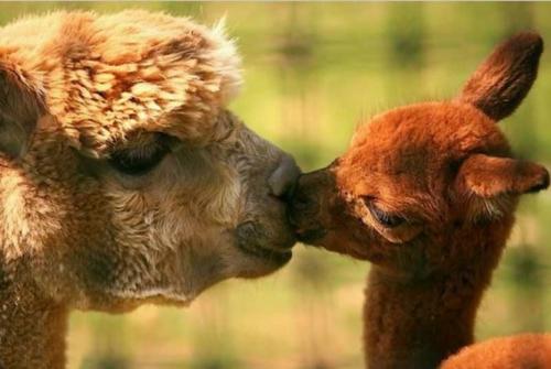 Verliebte Tiere - niedliche Tiere, die Ihre Gefühle ausdrücken