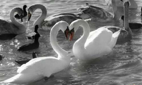 Verliebte Tiere Niedliche Tiere Die Ihre Gefühle Ausdrücken