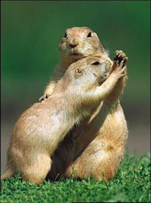 Pin Verliebte Tiere Niedliche Tiere Die Ihre Gefühle Ausdrücken on ...