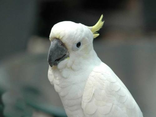 Tiere polar unglaubliche weiß albino papagei