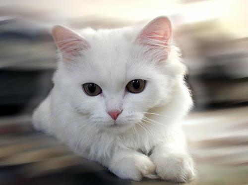 albino Tiere polar unglaubliche weißkatze