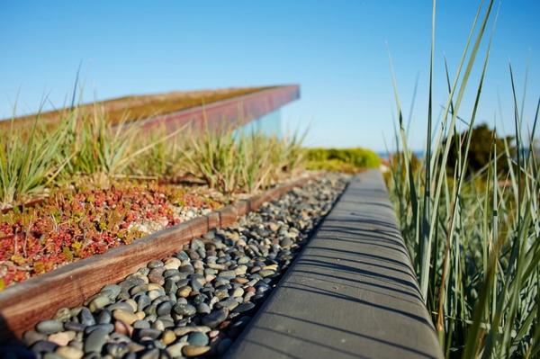 dachbegrünung flusssteine gräser und sukkulenten