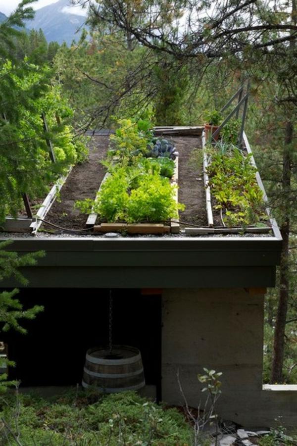 dachbegrünung kräuter und gemüse garten