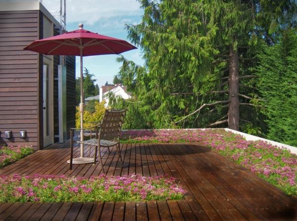 dachbegrünung magenta blüten und sonnenschirm