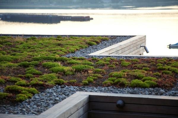 dachbegrünung moos und kieselsteine