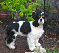 Hunde spielen gerne im Freien – ist Ihr Garten hundgerecht?