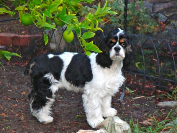 hunde süß in schwarz und weiß