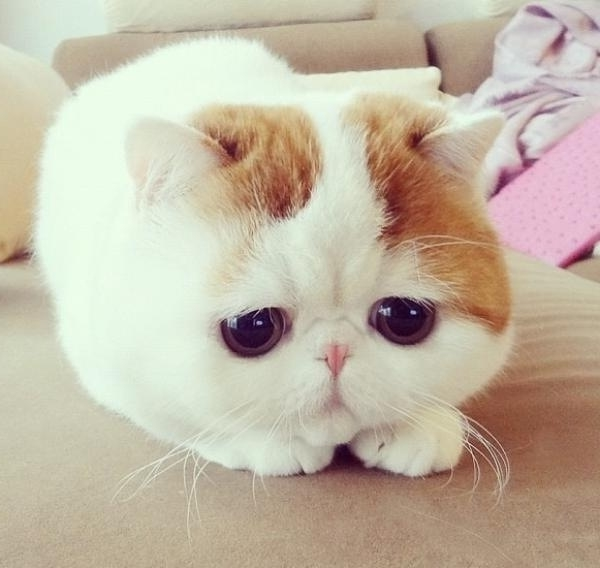 lustige niedliche tiere bunt ein lebendes kuscheltier katze