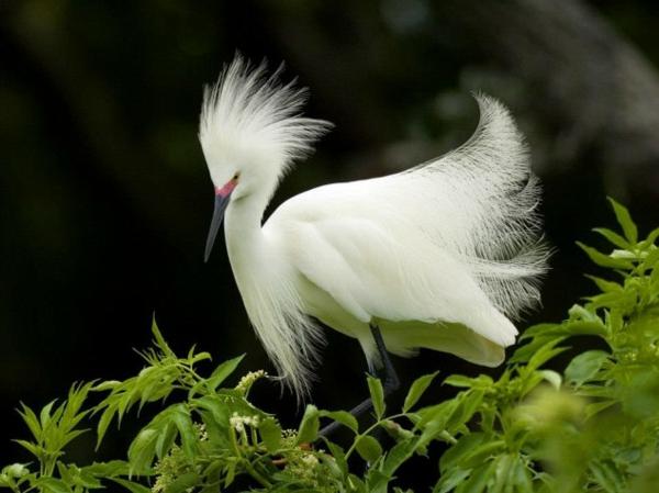 lustige tiere exotischer vogel mit feinen federn in weiß