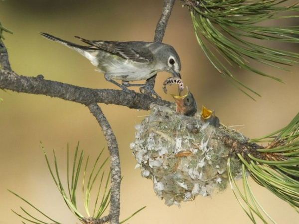 lustige tiere hungrige küken im nest