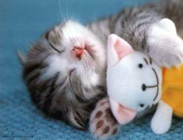 lustige tiere kleine katze mit kuscheltier schlafend