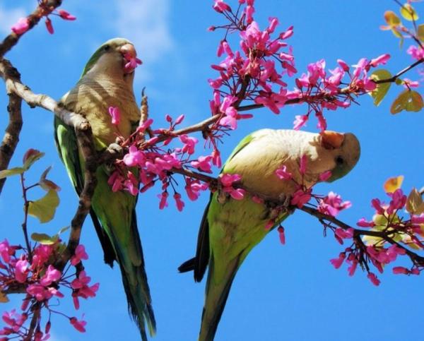 lustige niedliche tiere papageienpaar beim fressen