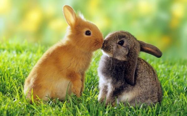 lustige niedliche tiere zwei kleine hasen