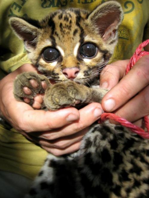 Süße Baby Tiere Bilder gallery - zalaces.bastelnmitkindern.info