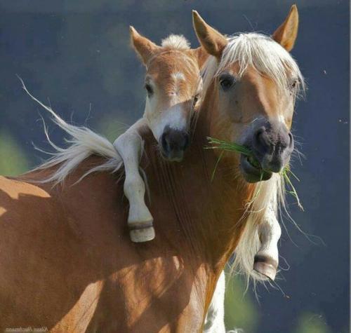 baby und pferd