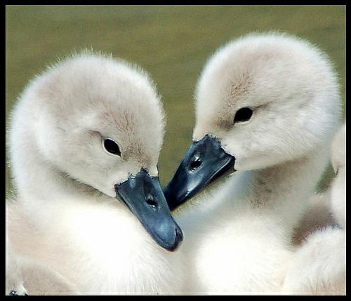 Süße Baby Tiere
