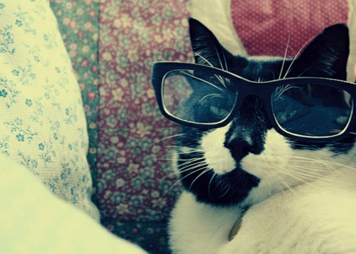 süße schicke katzen auf schwarz weißen flächen