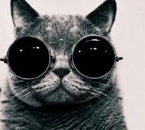 Süße Katzen mit Brillen – 22 lustige Bilder für echte Katzenliebhaber