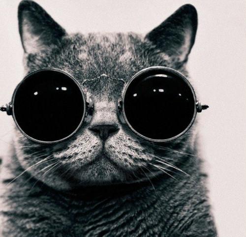 süße schicke katzen futuristischer look