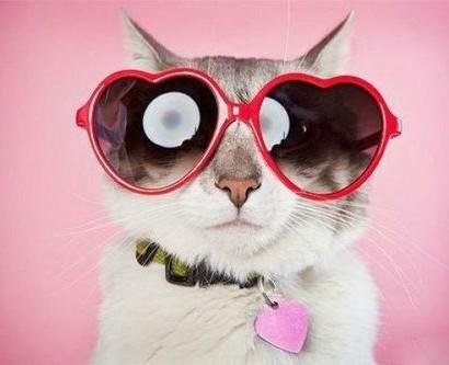 Se Katzen Mit Brillen 22 Lustige Bilder Fr Echte