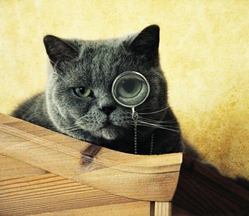 s e katzen mit brillen 22 lustige bilder f r echte katzenliebhaber. Black Bedroom Furniture Sets. Home Design Ideas