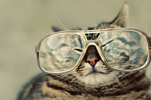 süße katzen mit retro brille
