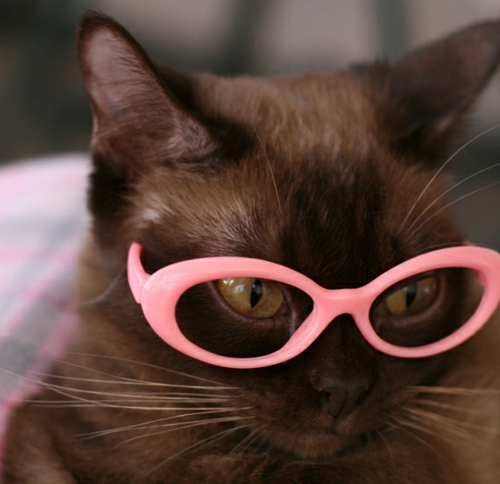 süße katzen mit rosa brillenfassung