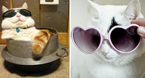 süße katzen mit sonnenbrille