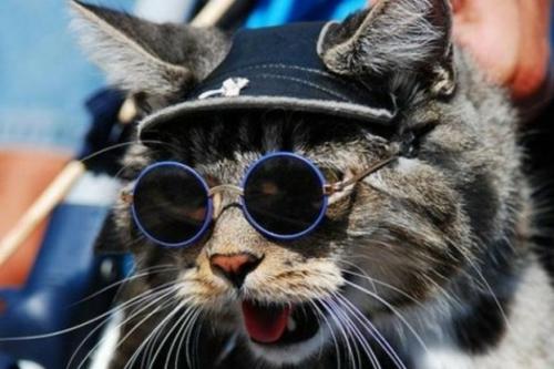 süße katzen runde brillengläser und rahmen in blau