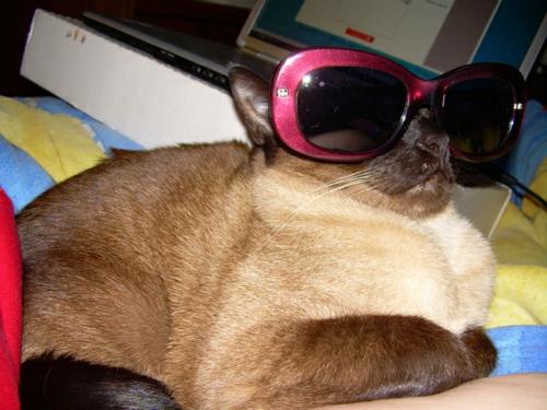 süße katzen schicke brille in magenta