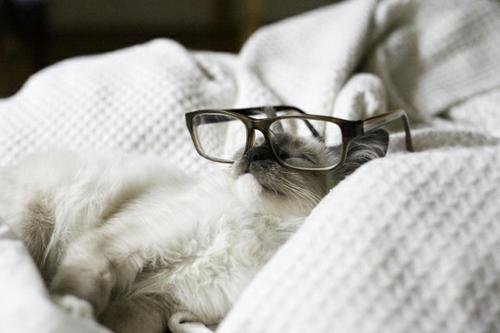 süße schicke katzen schlafend mit retro brille