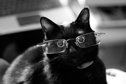 süße katzen schwarz mit feiner brille